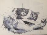 Hostel cat, Pudu Hostel